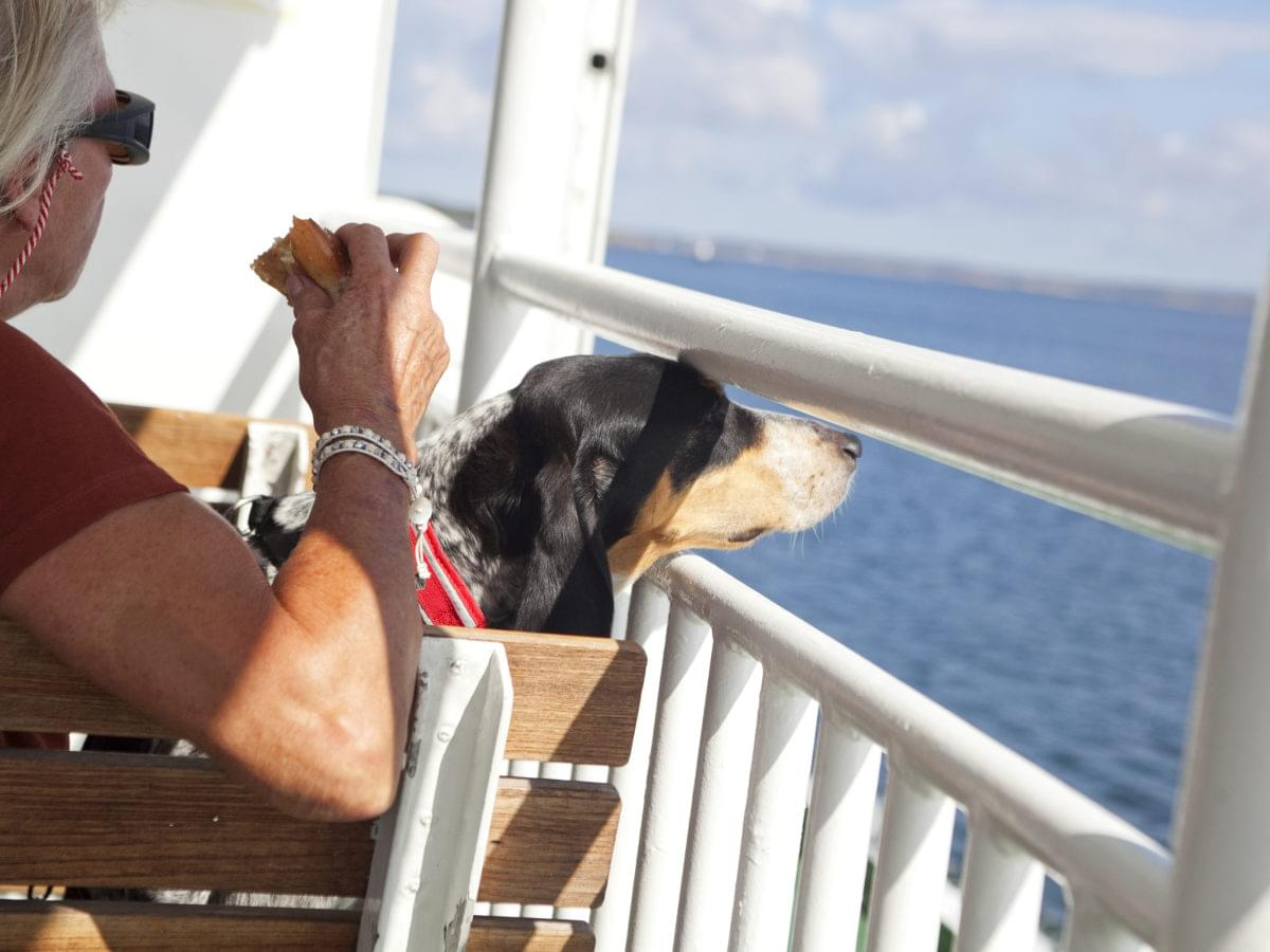 Dog on a ferry looking at the endless ocean.