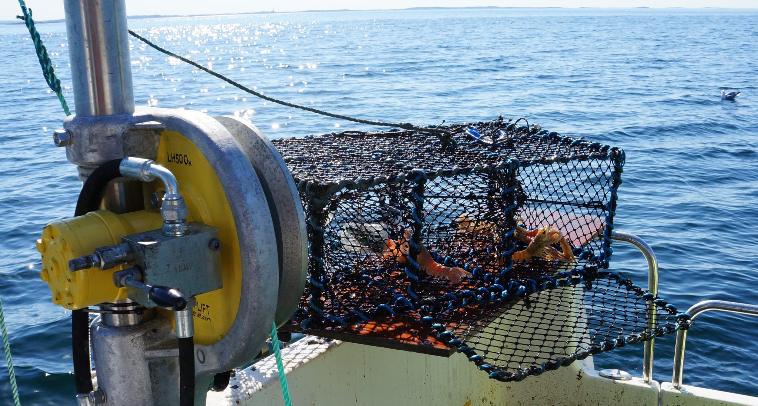 Björkö Marin och Fiske, kräftfiske