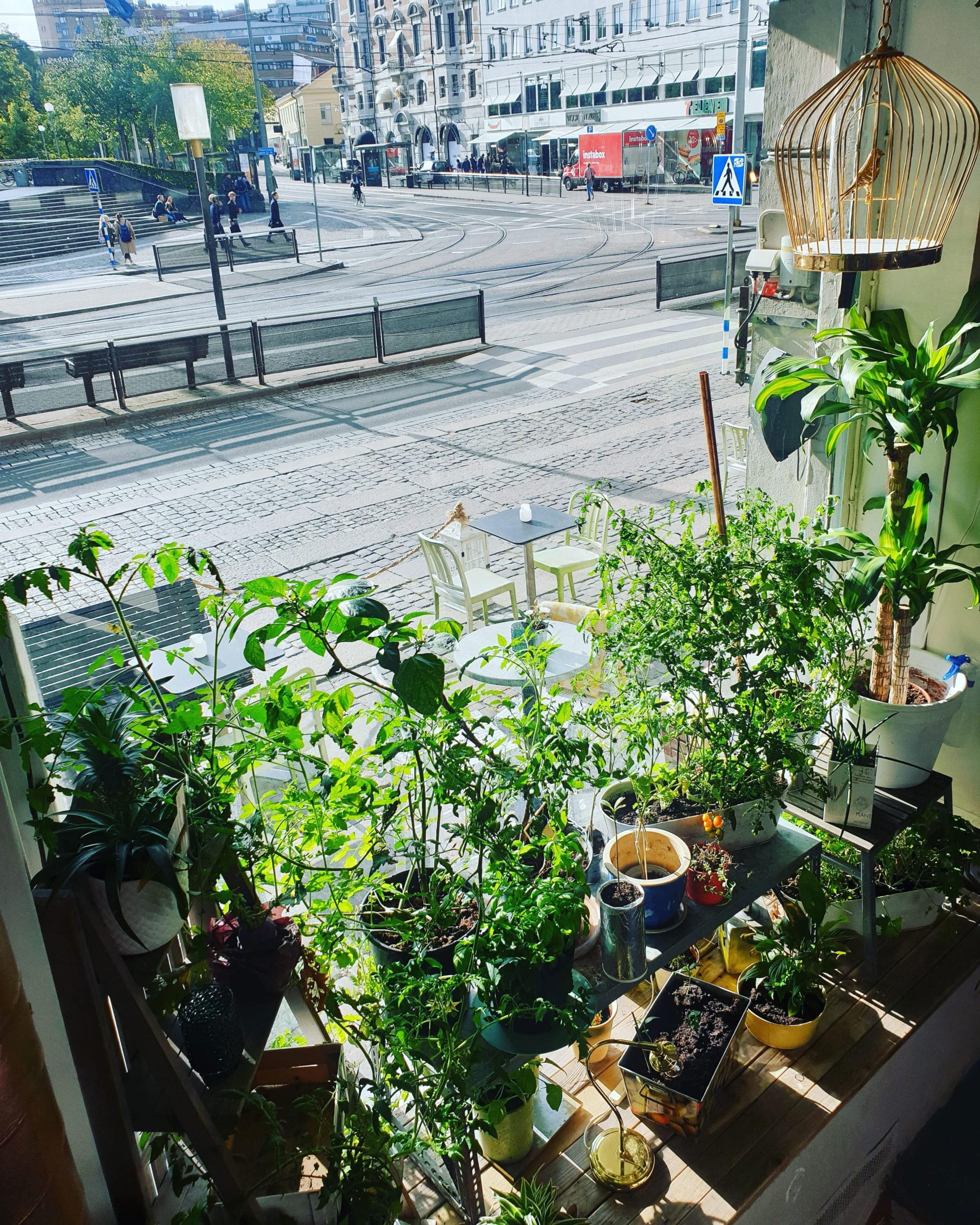 Window view from inside